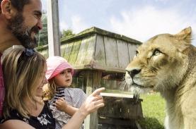 Déjeuner-des-lions