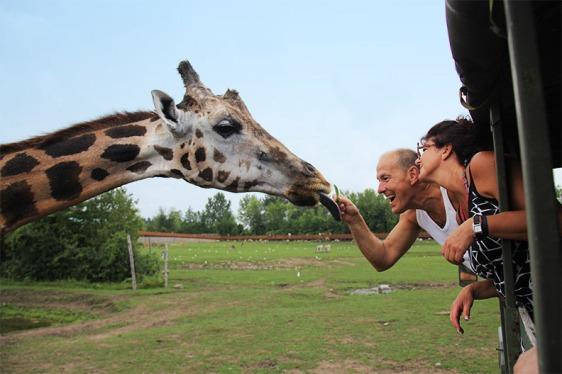 GirafeFSafari-Expédition-